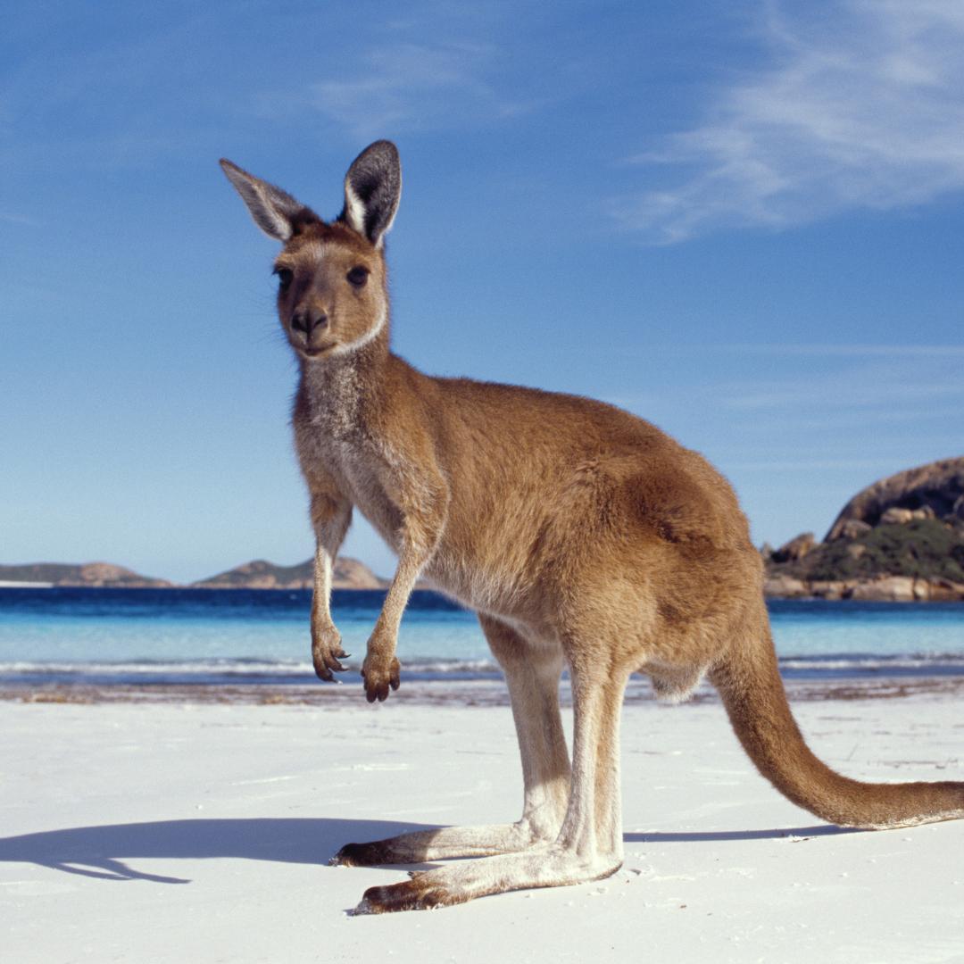 article australie